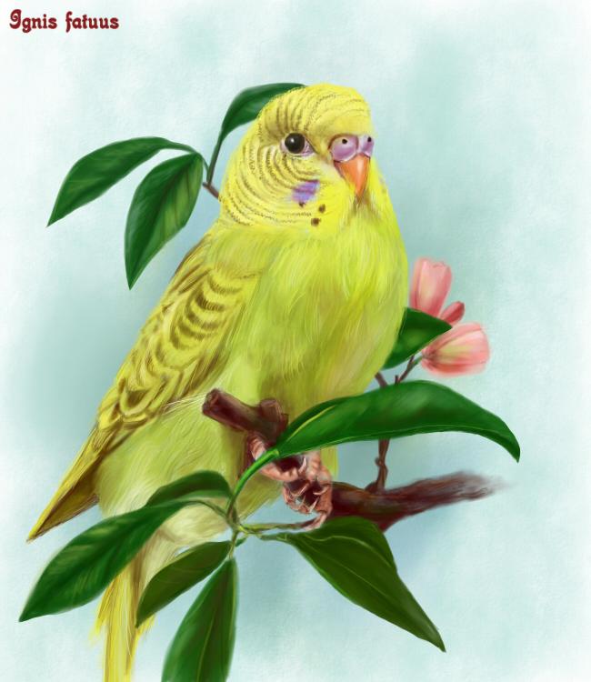"""Желтый попугай "" - собрать пазл онлайн."